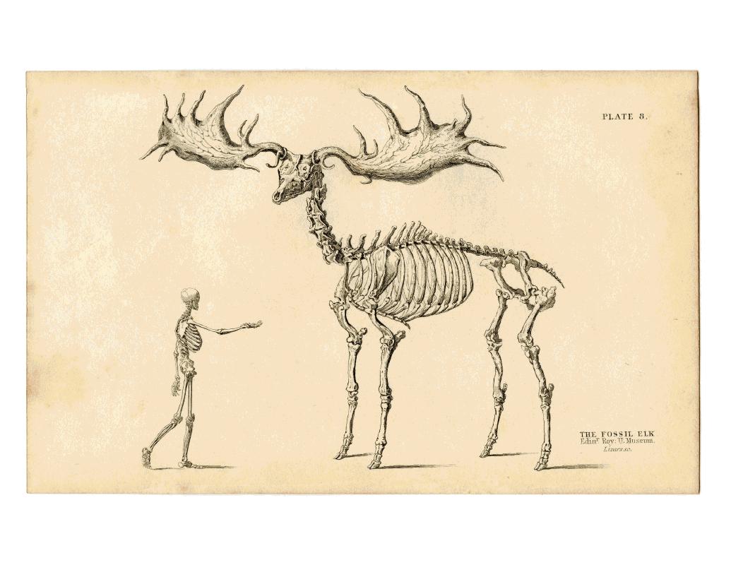 Big Elk. Gargantuan elk. Holy elk... | mistery | Schädel, Fabelwesen Colorado Elk Potion Map on