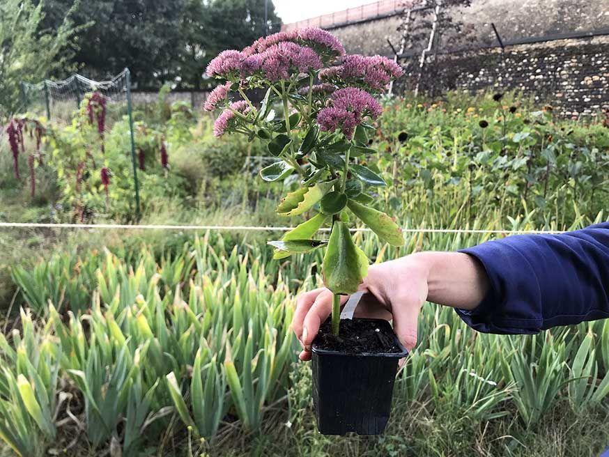 9 vivaces et arbustes à planter dans son jardin pour