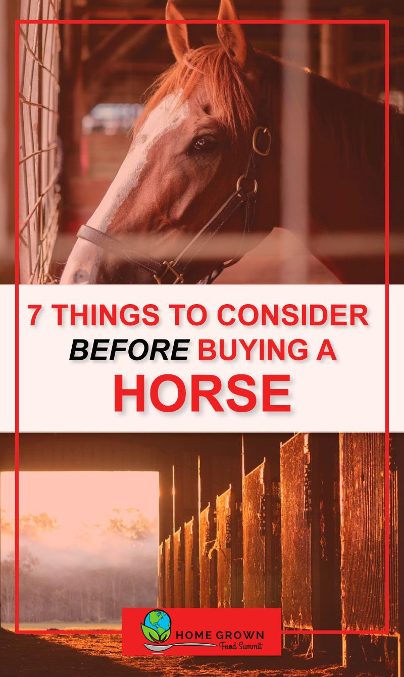 How much money time and land do you need to own a horse