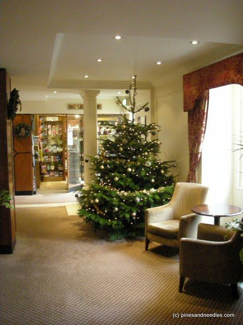 fresh real christmas trees delivered office - Real Christmas Trees Delivered