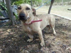 Calliope is an adoptable Basset Hound Dog in Burlington