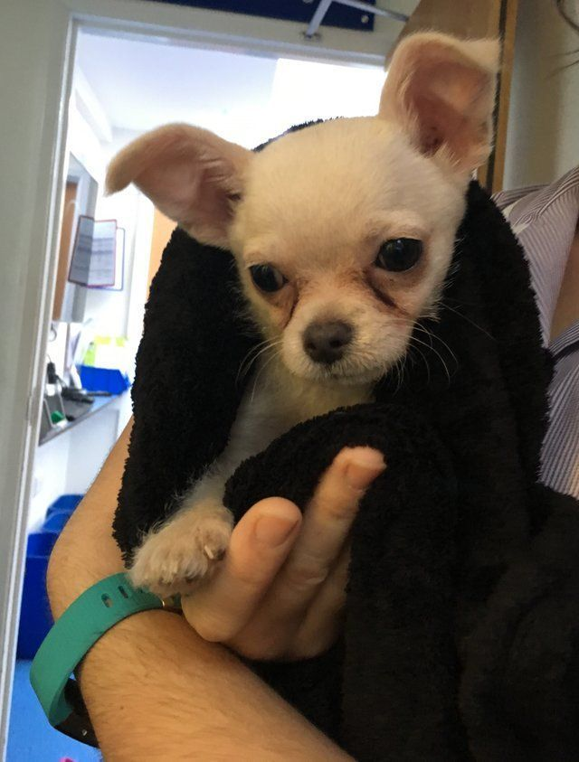 A Towel Left In A Park Was Shivering And This Little Guy Was