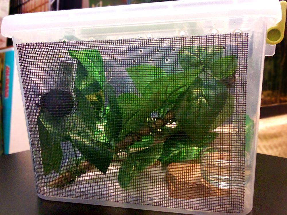 Hatchling crested gecko DIY enclosure. Made from a plastic ...Leopard Gecko Hatchling Tank Setup