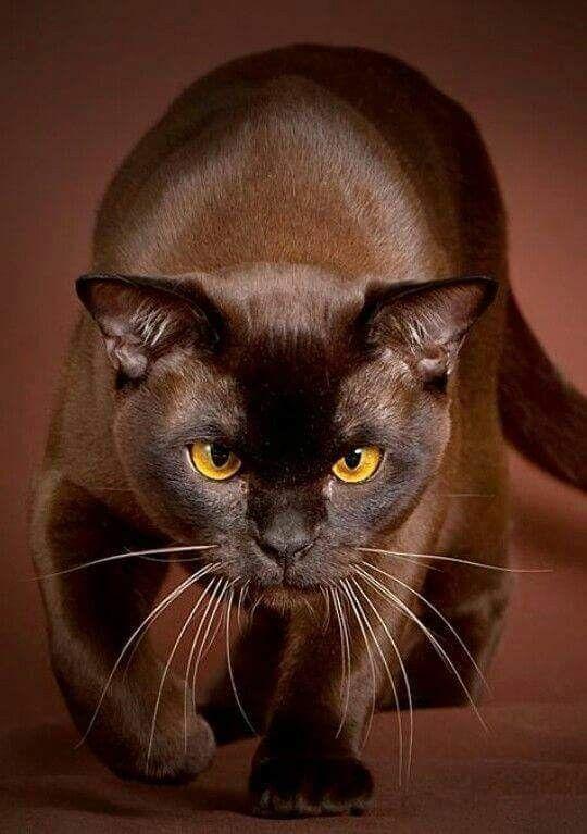 Pin de IsisPitu Pitu en joyas Gatos bonitos, Gatos