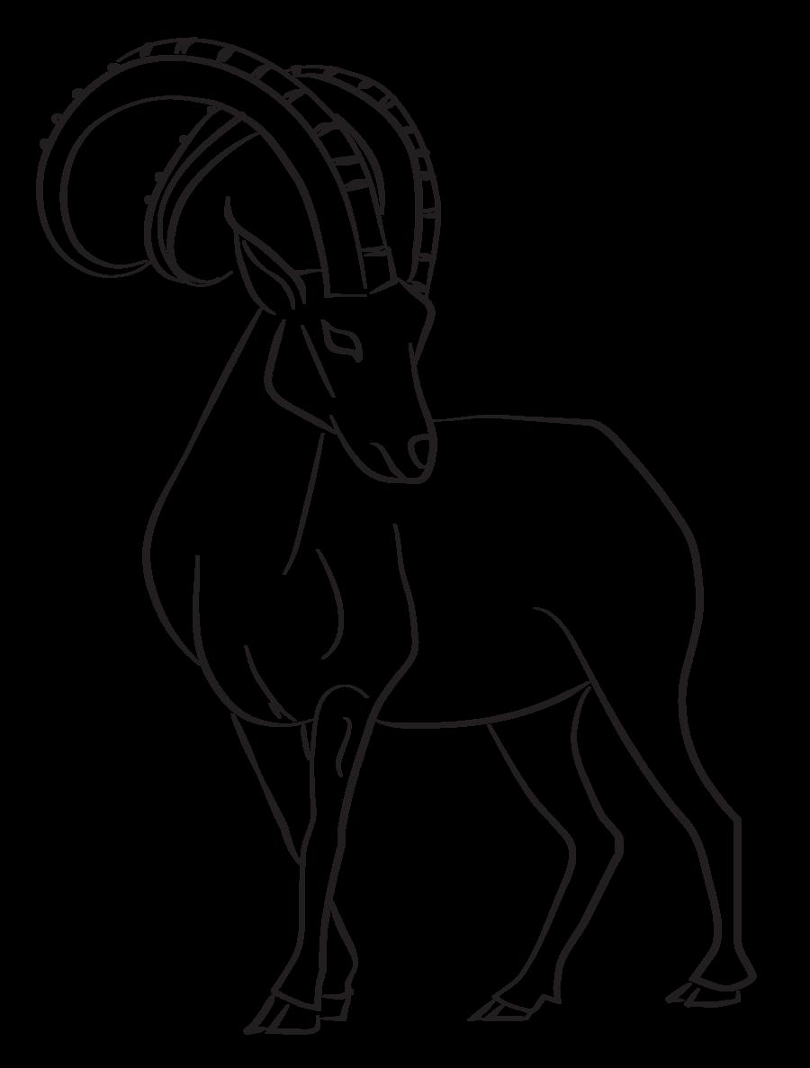Ibex Lines   Animal drawings, Drawings, Drums art