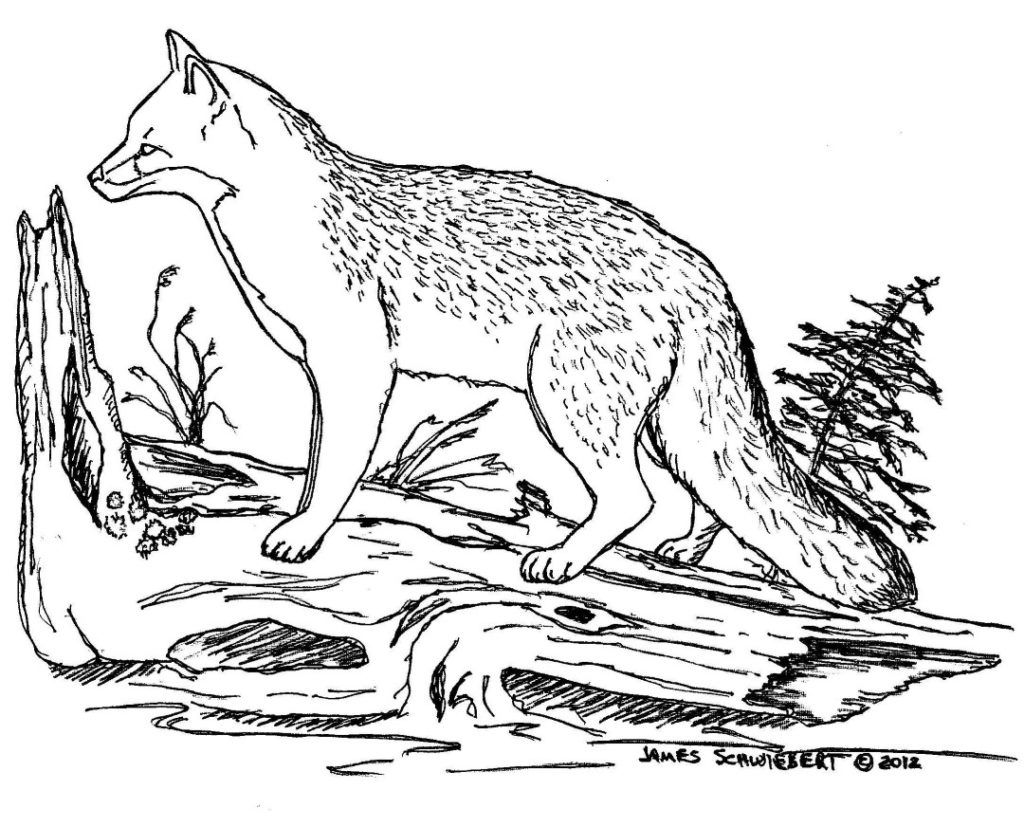 Coloring Rocks Fox Coloring Page Animal Coloring Pages Cute Fox Drawing