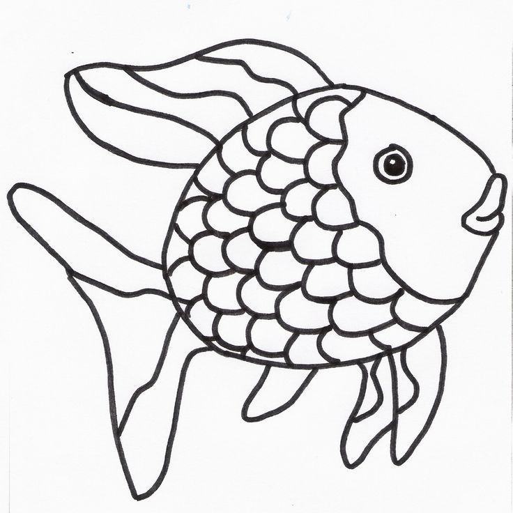 thema de mooiste vis de zee zoeken