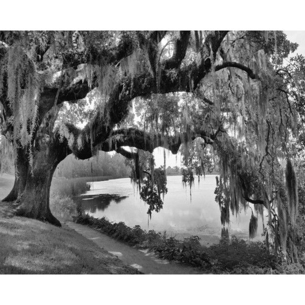 Black White Willow Tree Wall Art Photography Home Decor Matted Picture 45 Liked