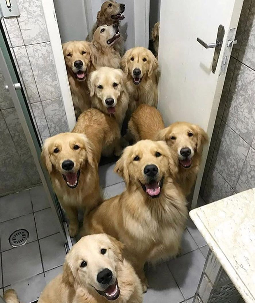Family Goals Wedding Love Dogs Goldenretriever Tag A