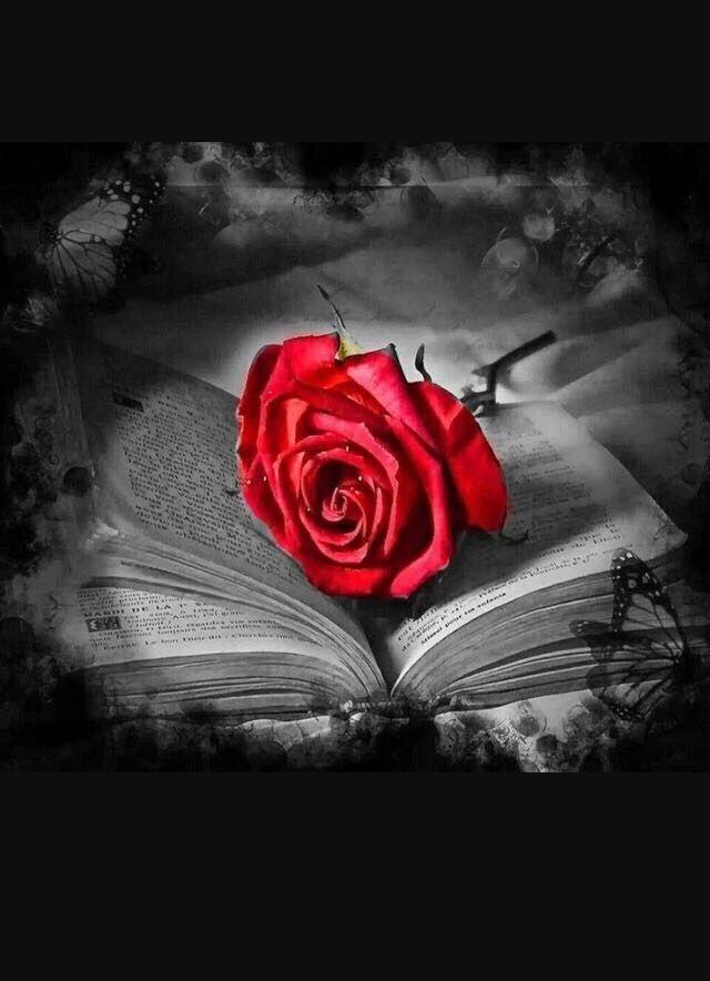 S Today Pin Blumenzeichnung Blumenfotos Rote Kunst