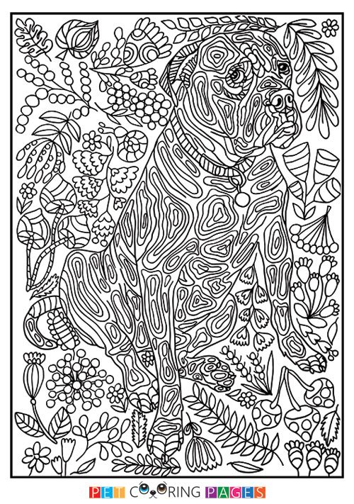 free printable mutt coloring page amba available for download simple and detailed versions