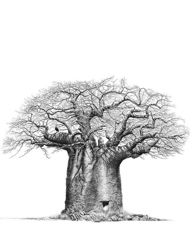 Baobab African Tree Tree Drawings Pencil Tree Drawing