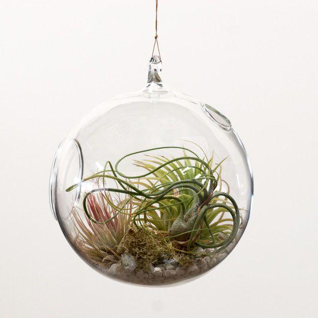 mini jardim na bola de cristal. | flores, plantas y jardines
