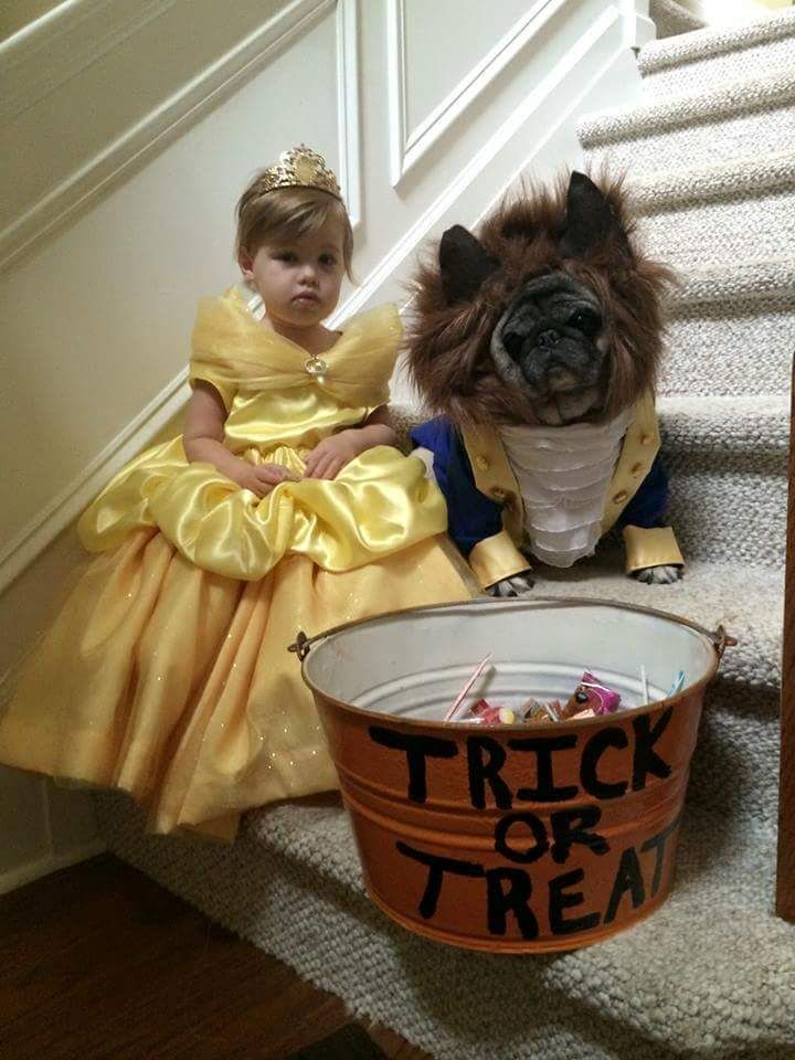 Beauty And The Beast Pug With Images Cool Halloween Costumes