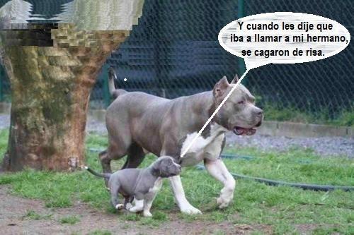 Hermano Mayor Perros Enormes Fotos De Perros Graciosas Perros Chatos