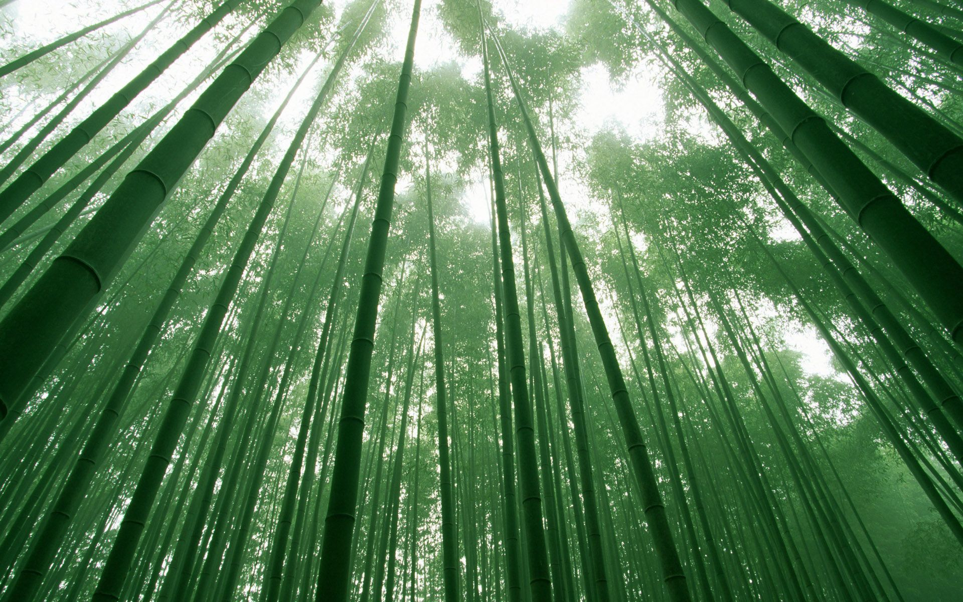 Bamboo Forest Wallpaper Hd Wallpaper Bamboo Forest Bamboo