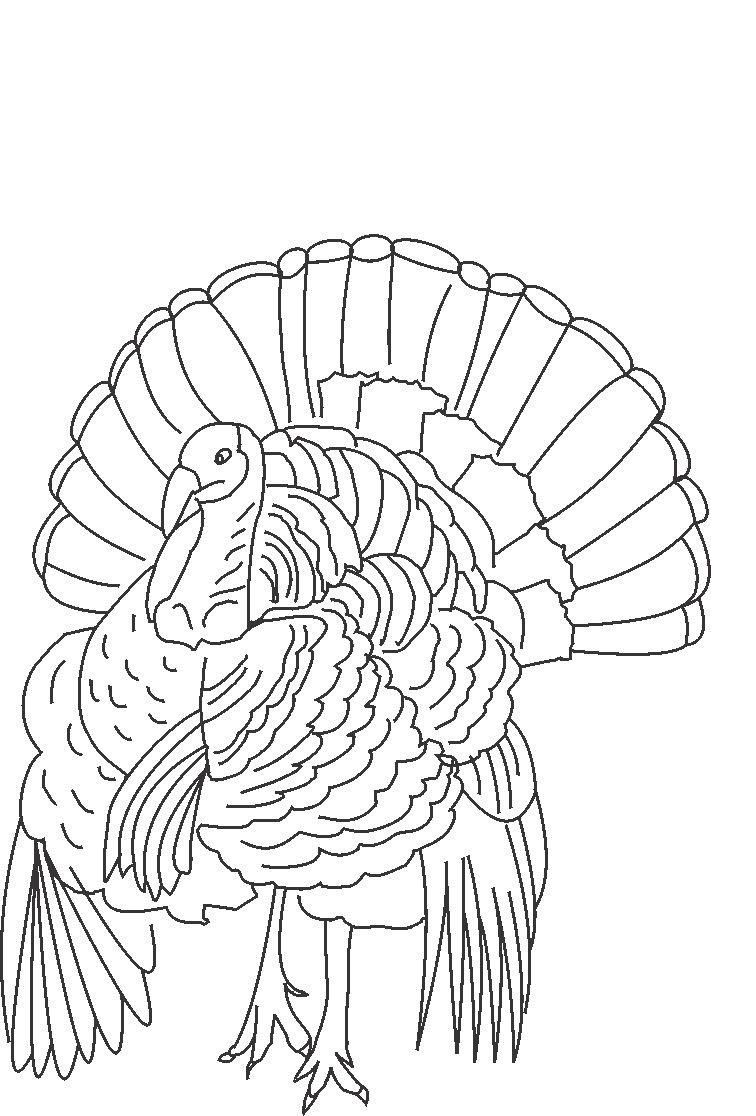 Free Coloring Turkey Print Out