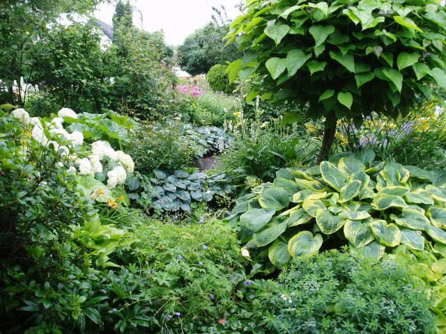 Hostas In The Garden This Garden Is In Holland But Similarities Are Noted In My Minnesota Garden Garten Garten Pflanzen Pflanzen Schatten