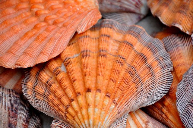 Shells ~ An example of orange and gray in nature.
