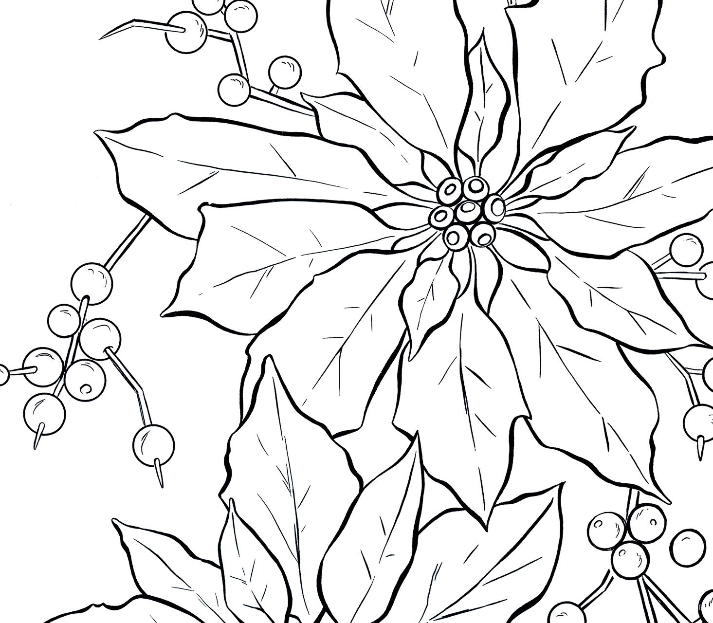 8 poinsettia clipart!  line art realistic drawings clip art