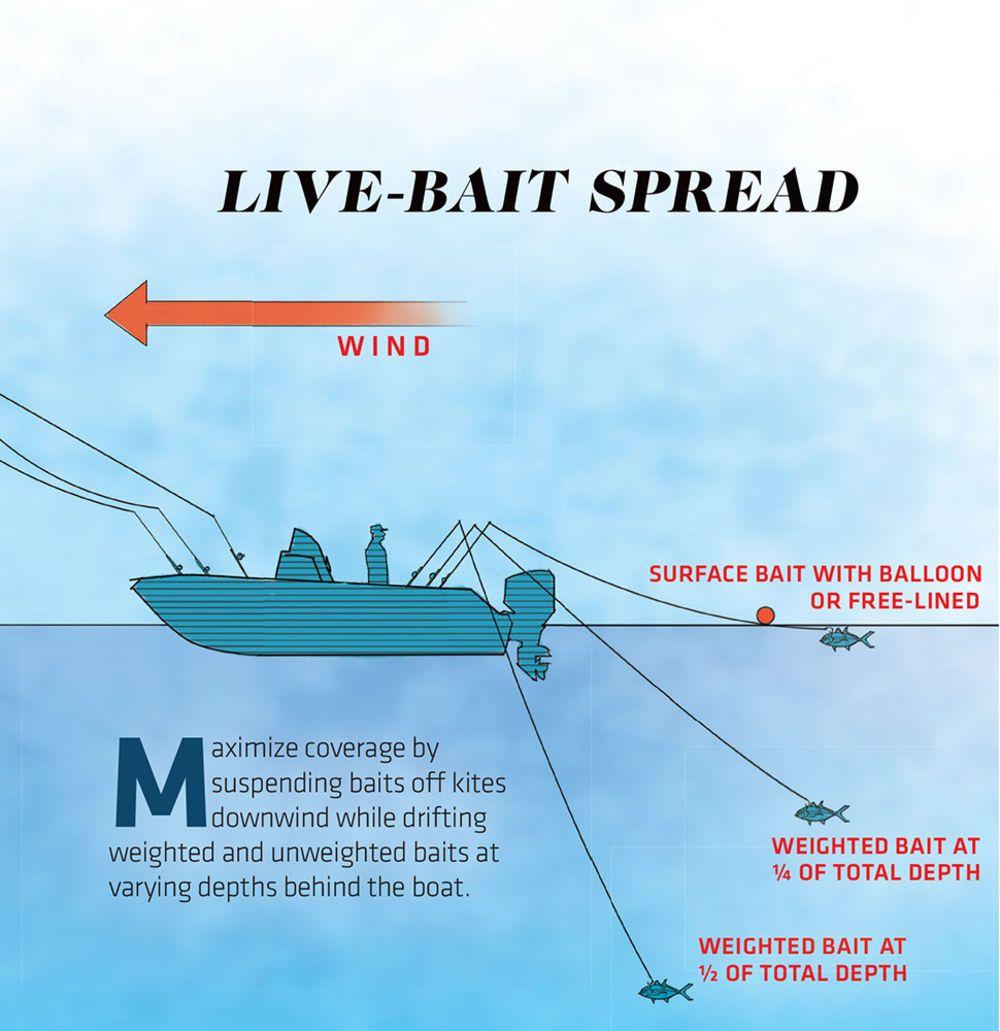 Expert Tactics For Florida Sailfish Fishing Rigs Sailfish Fishing Tips
