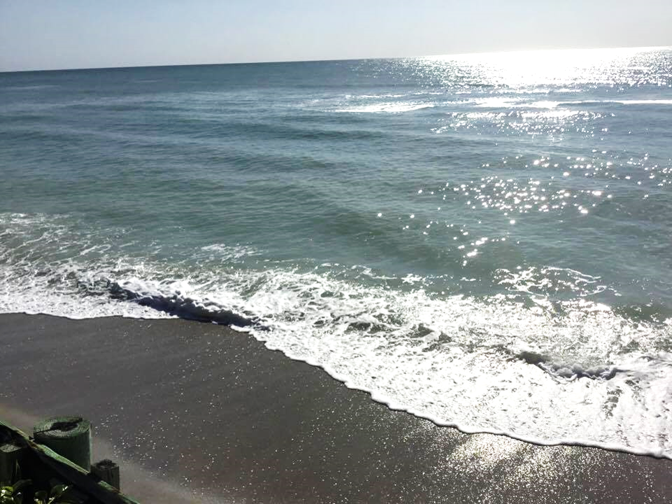 Our beach on Manasota Key!   Beach, Florida hotels, Pearl ...