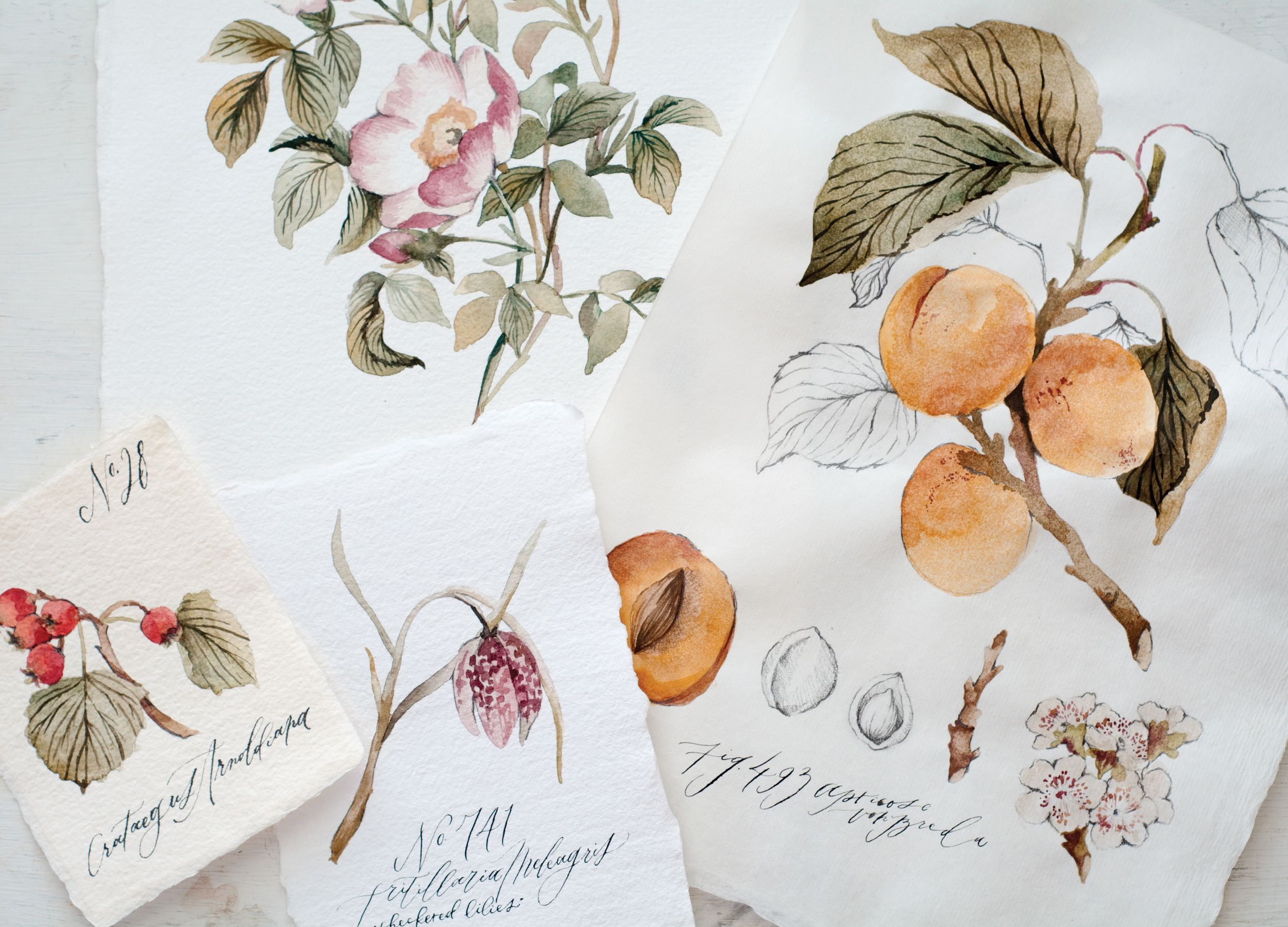 Wildfield Paper Co Watercolor Botanicals Botanical Illustration