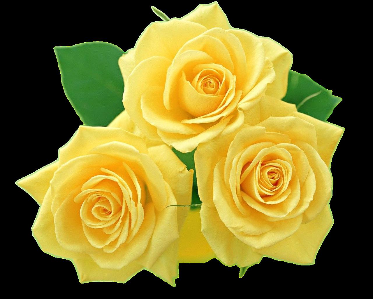 Rosas Amarelas Rosas amarelas, Buquê de flores, Flores