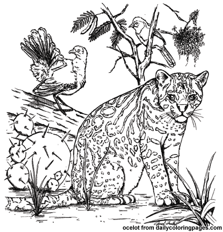 south america animals coloring pages texas ocelot animal coloring pages