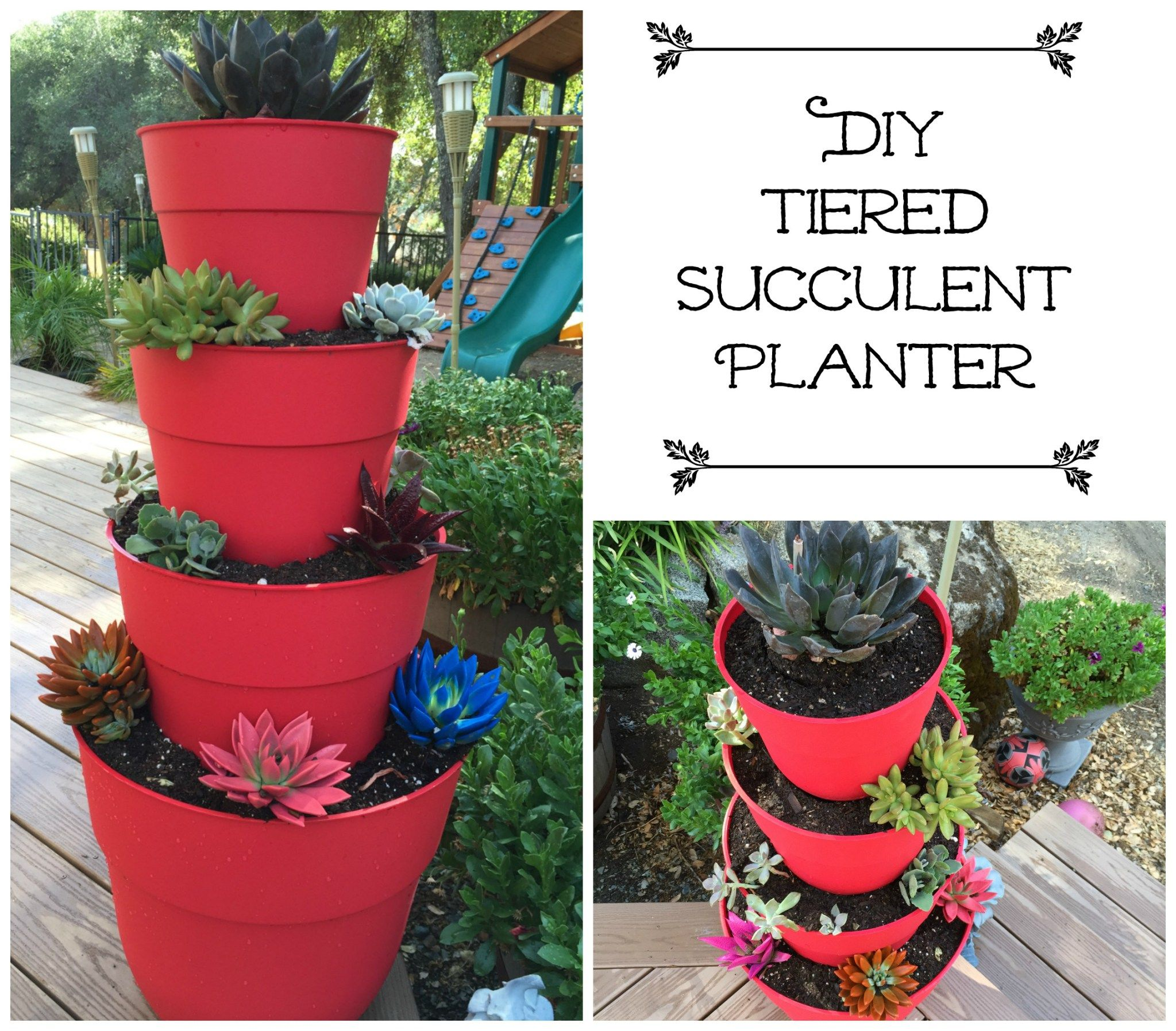 How to Make a DIY Tiered Succulent Planter Succulent