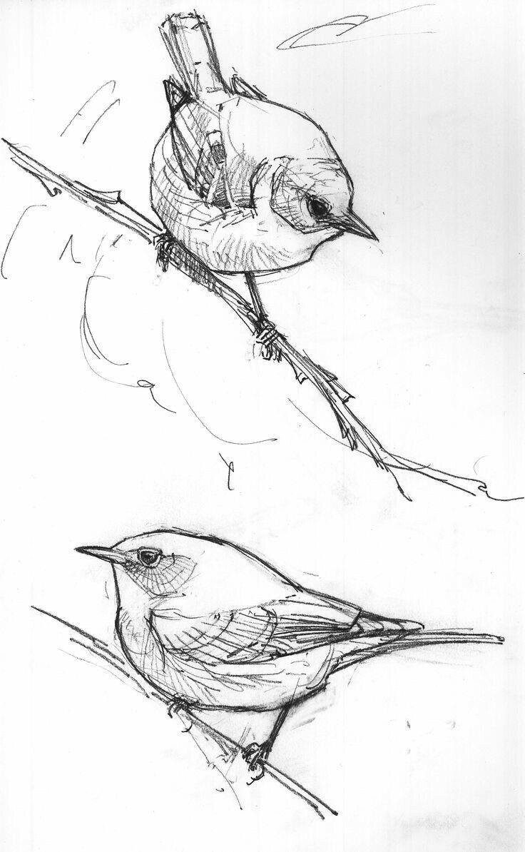 Для любимого, картинки рисунок карандашом птицы