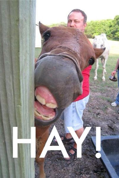 Hay is for horses