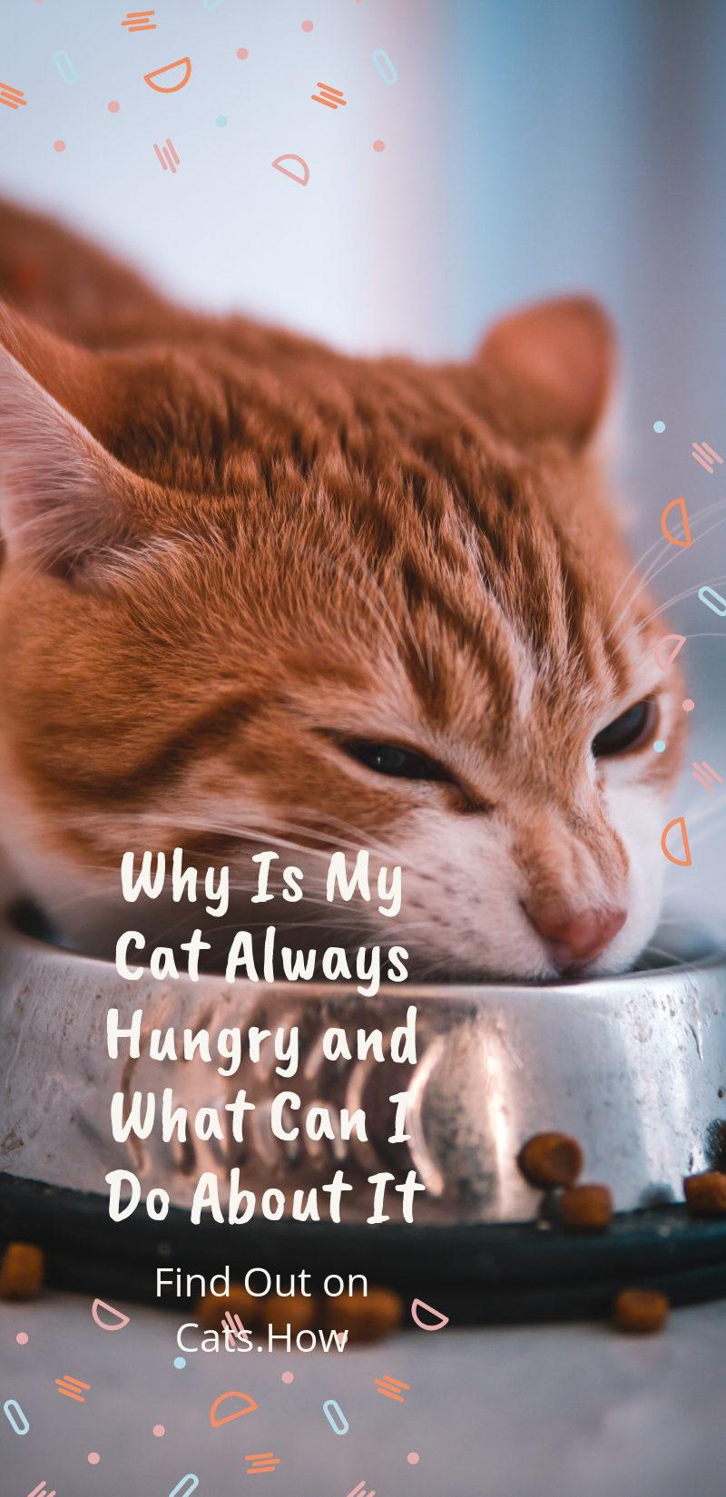Why Is My Cat Always Hungry and What Can I Do About It