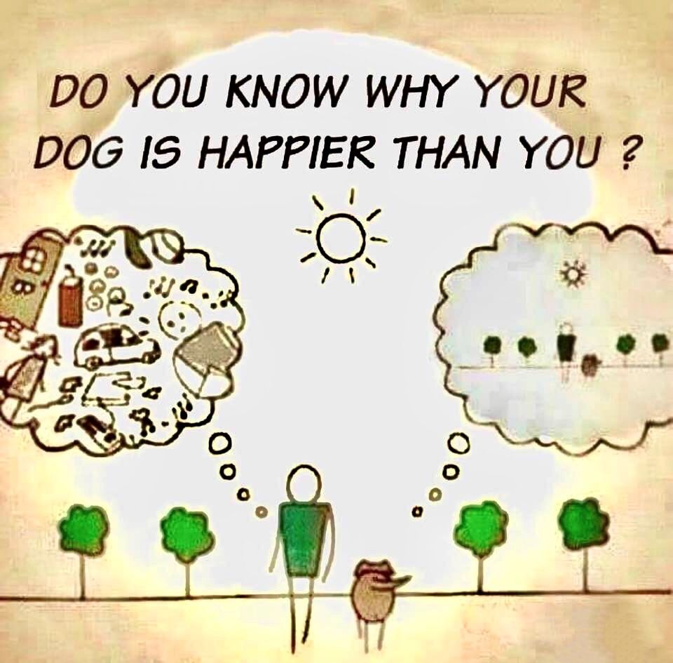 Do you know why your dog is happier than you