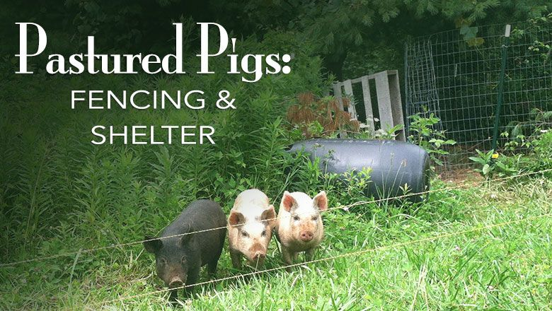 Pastured Pigs Fencing and Shelter Blue Yurt Farms