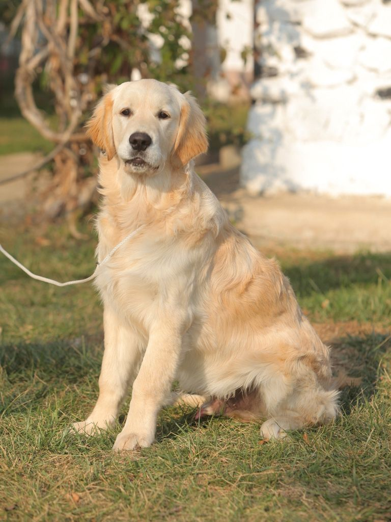 This Golden Retriever Looks Just Like Macy