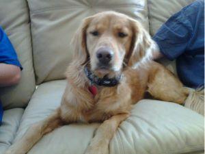 Adopt Zsazsa On Dogs Golden Retriever Dogs Kids Dogs