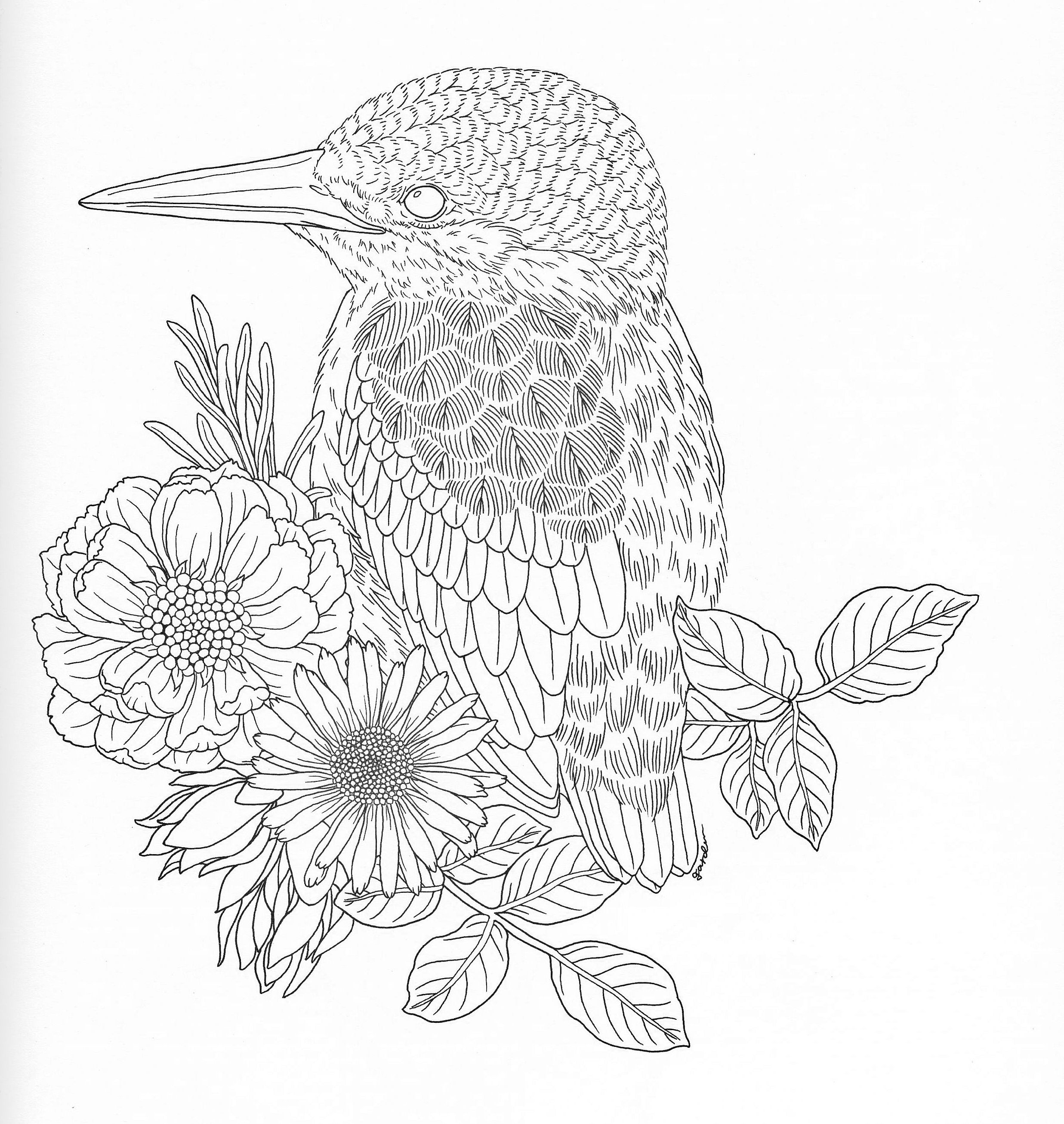 Harmony Of Nature Adult Coloring book Pg 27 | Color pages ...