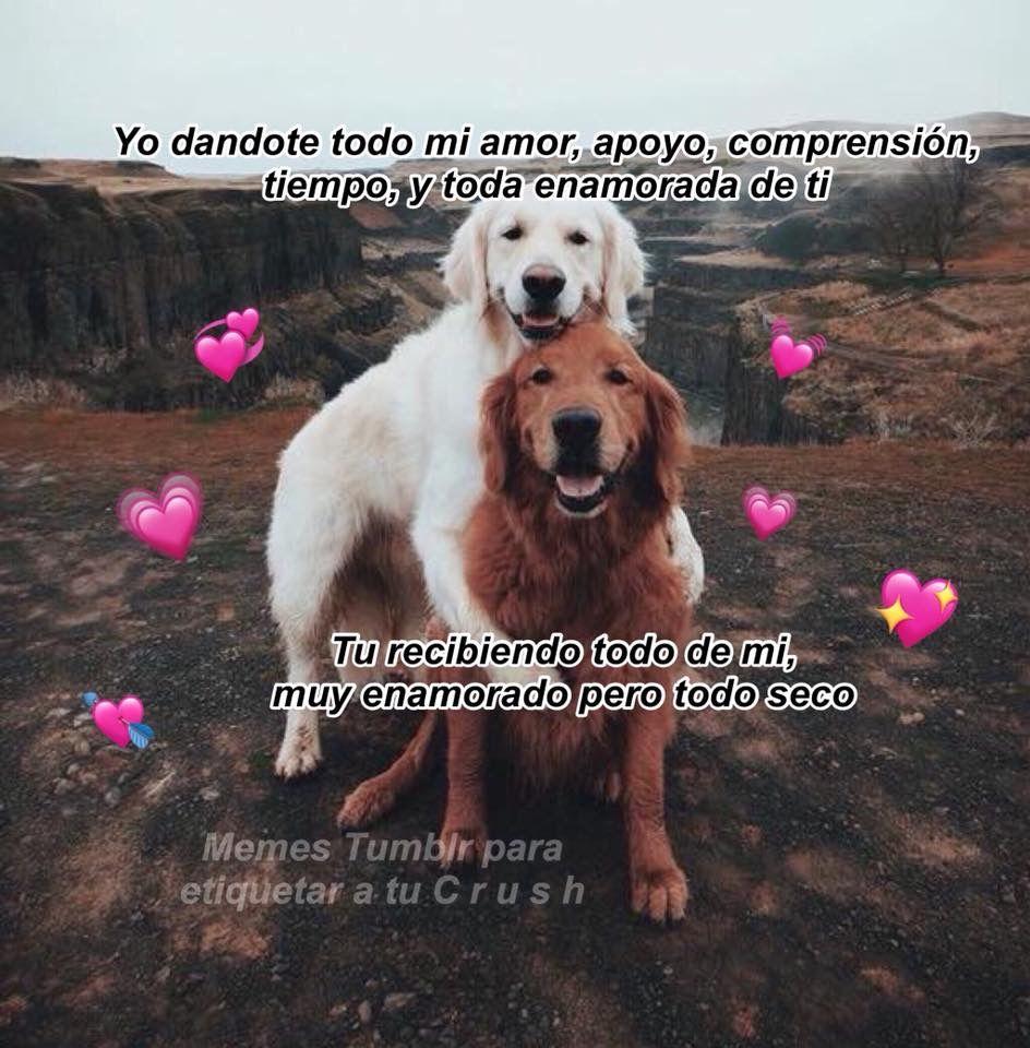 No Es Cierto Frases De Minions Memes Románticos Y Frases