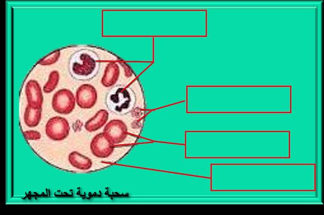 تركيبة الدم مكونات الدم