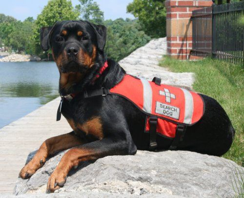 Welcome To The Esmond Rottweiler Homepage And The Online Home Of