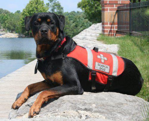 Rescue Dog Rottweiler Rottweiler Breed Board Pinterest Dogs