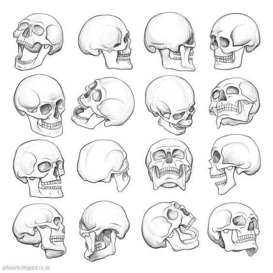 Imagenes De Calaveras Para Dibujar Craneo Dibujo Esqueleto Dibujo Arte De Anatomia Humana