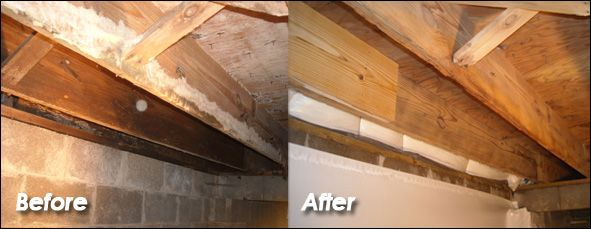 Crawlspace Mold Removal Mold Remediation Mold Remover Crawlspace