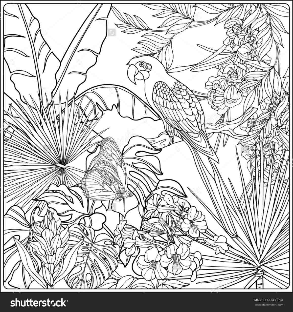 Printable Free Coloring Pages Jungle Adults Google Search Bird Coloring Pages Coloring Books Coloring Pages