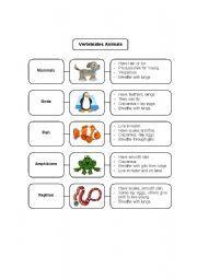 English teaching worksheets: Invertebrates