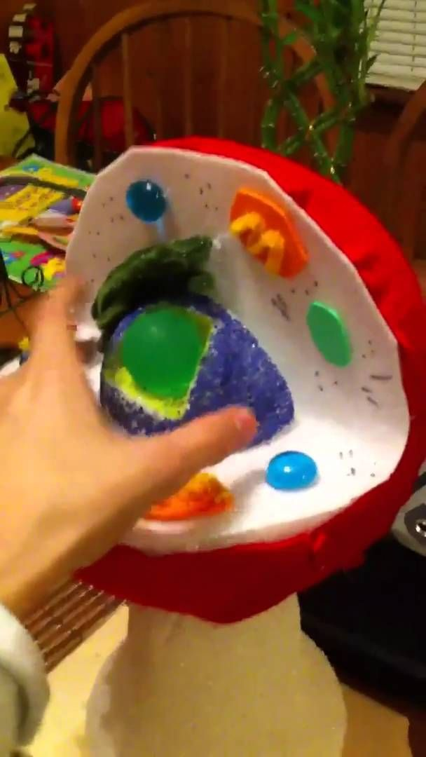 Cell Project Biology Plant Cell Model Plant Cell