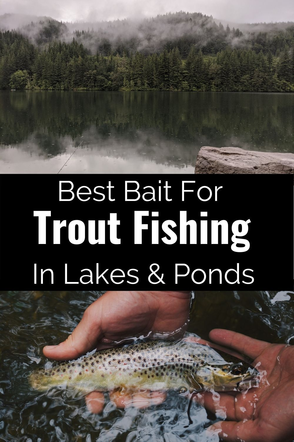 Best Bait For Trout Fishing In Lakes and Ponds in 2020