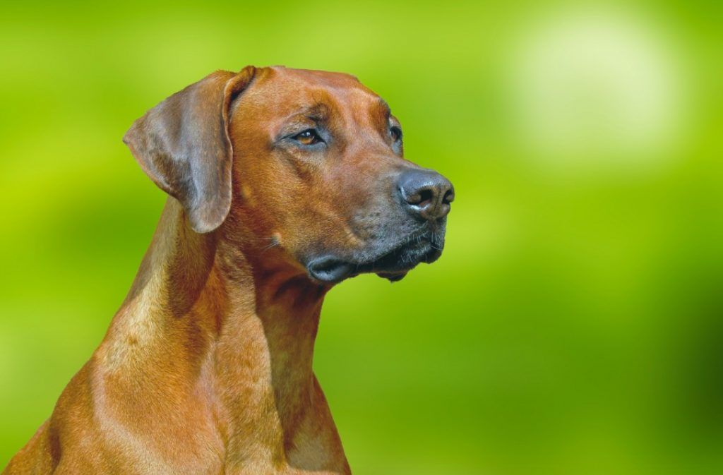 Not Family Friendly Dog Breeds That Might Cause Your Homeowners