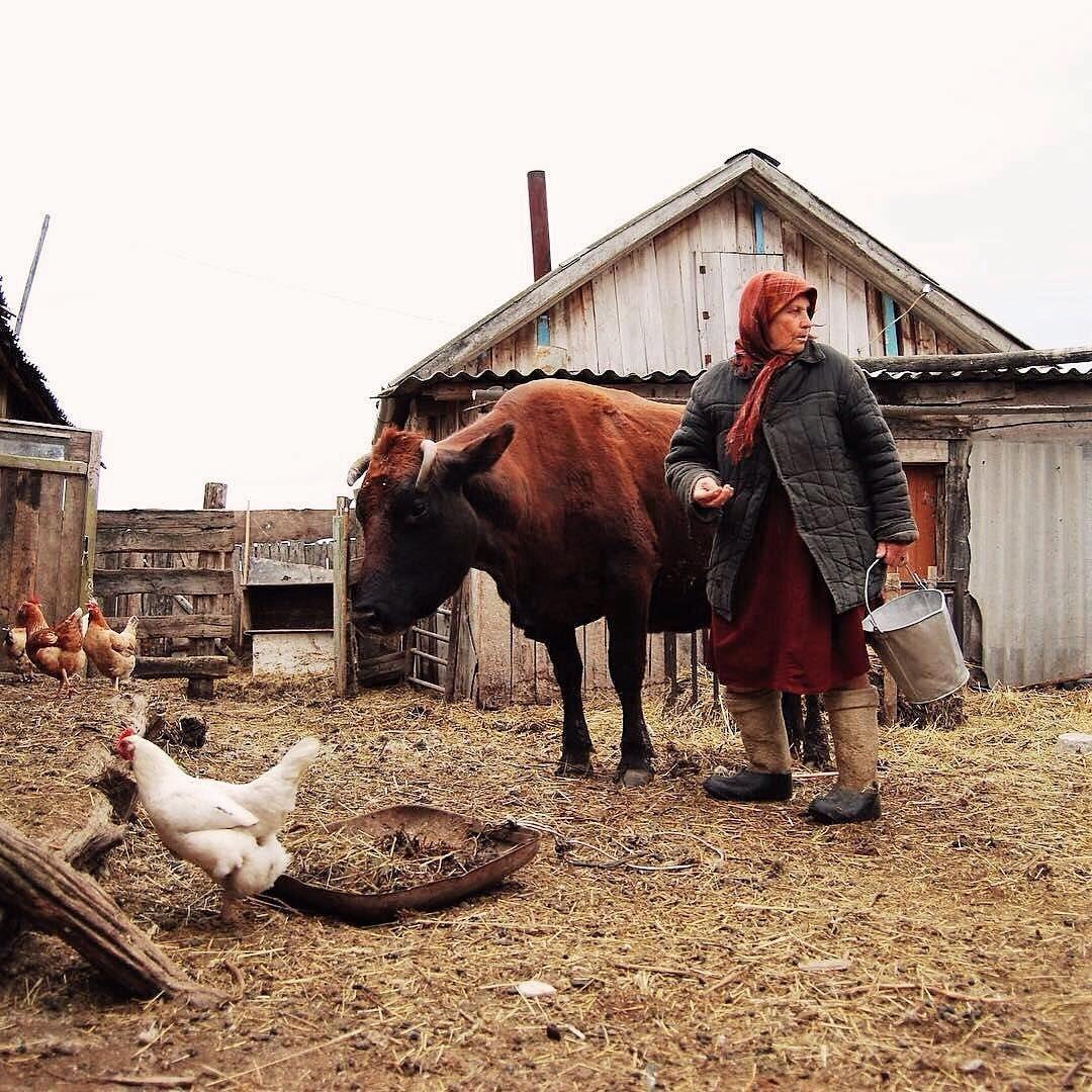 была фото жизнь в деревне россии жизни этих собак